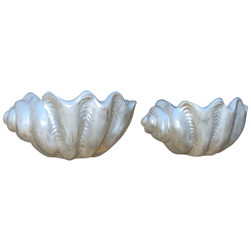Pair of Shell Sconces.
