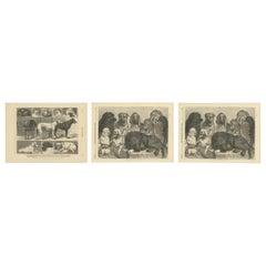 Set of Three Dog Show Prints