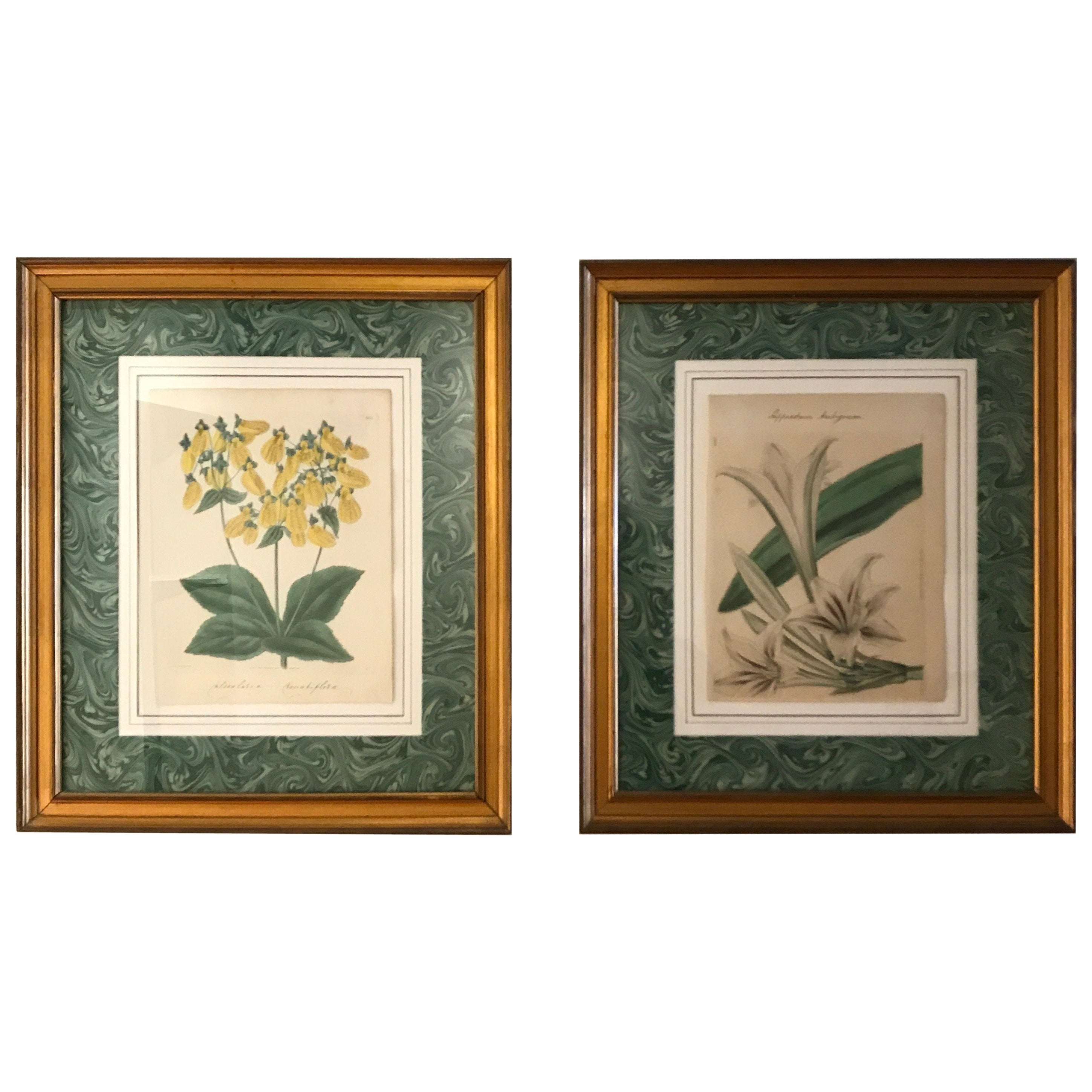 Pair of Original Antique Hand Colored Botanical Engravings