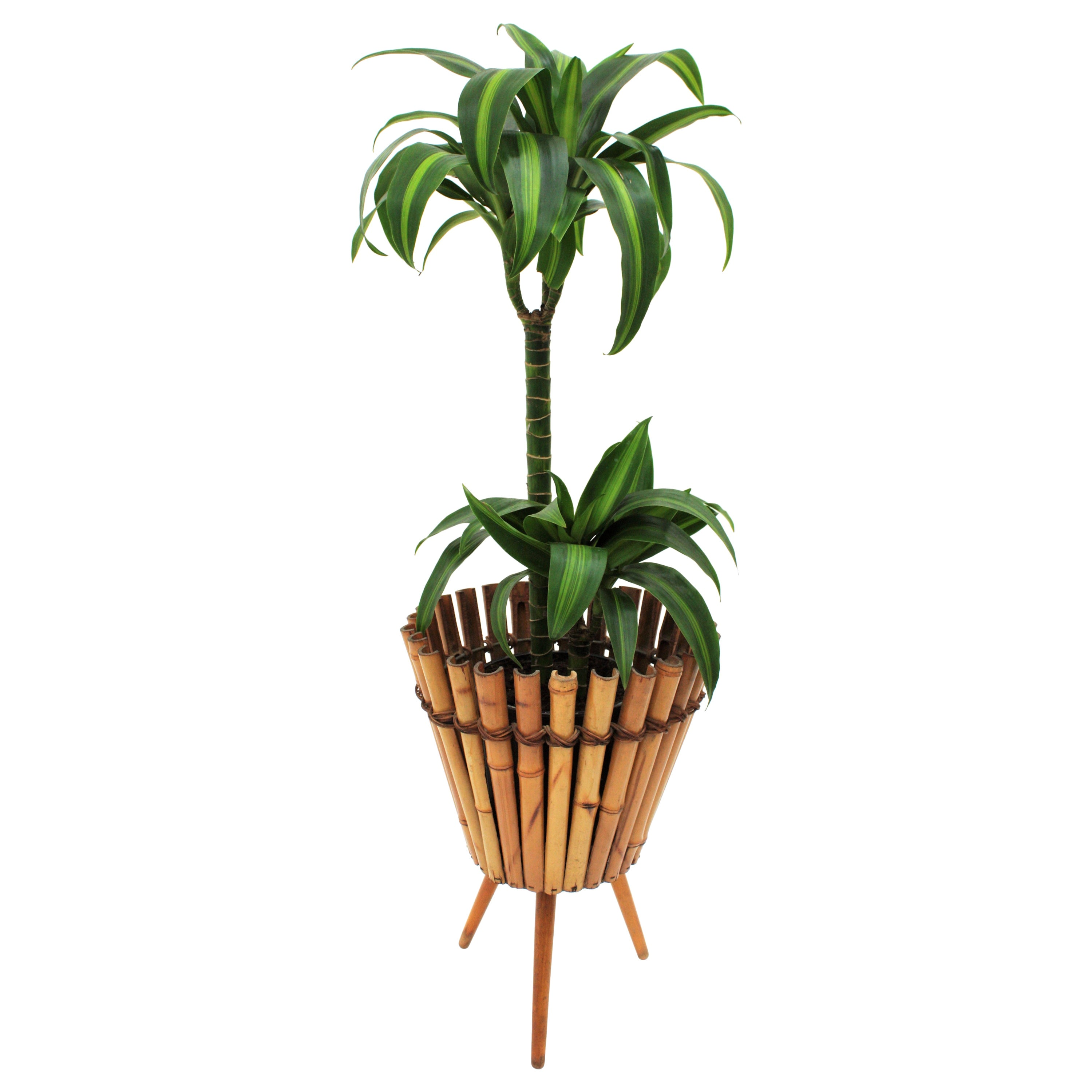 French Modernist Handcrafted Bamboo and Rattan Planter, 1950s