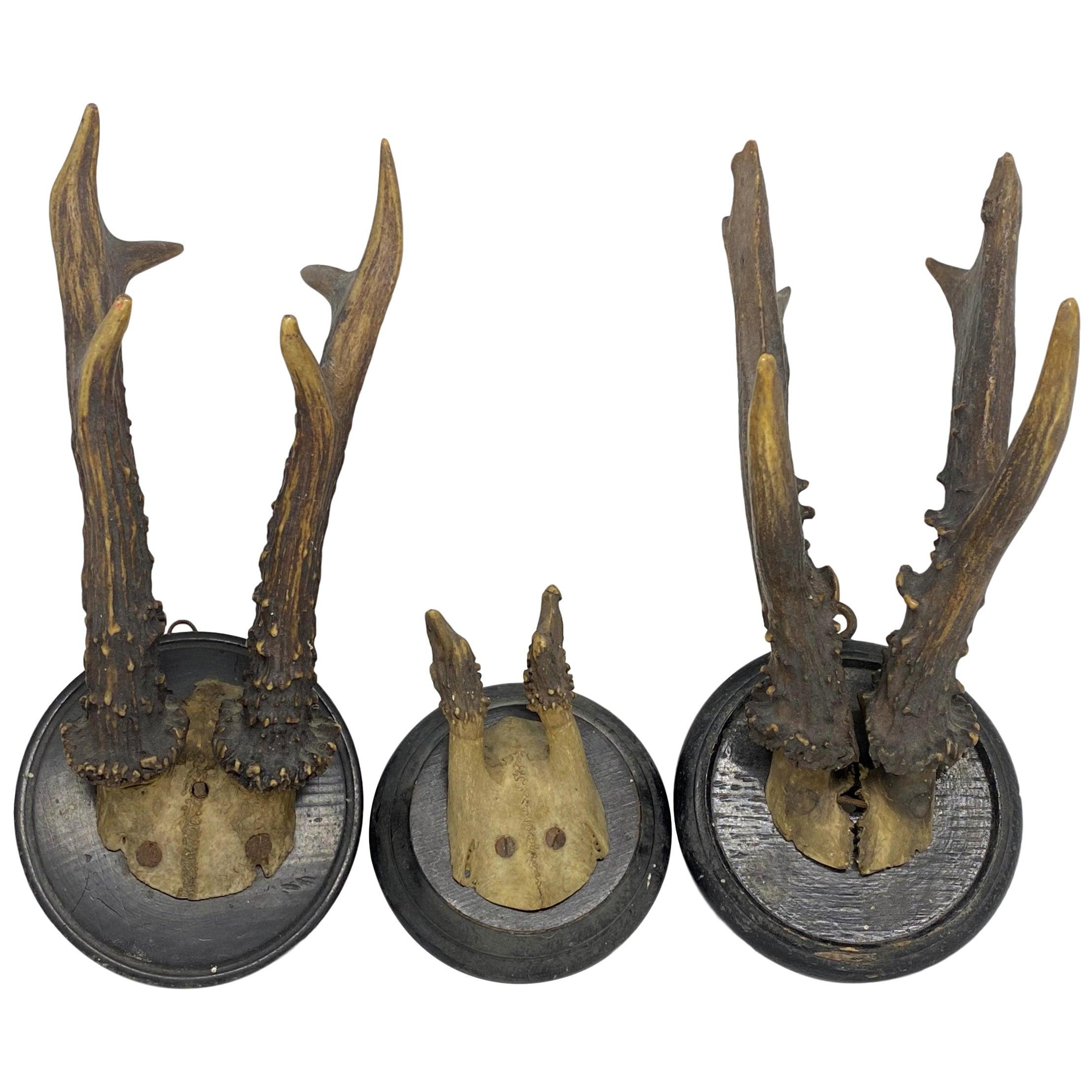 Three Antique Black Forest Deer Antler Trophies, German, 1890s