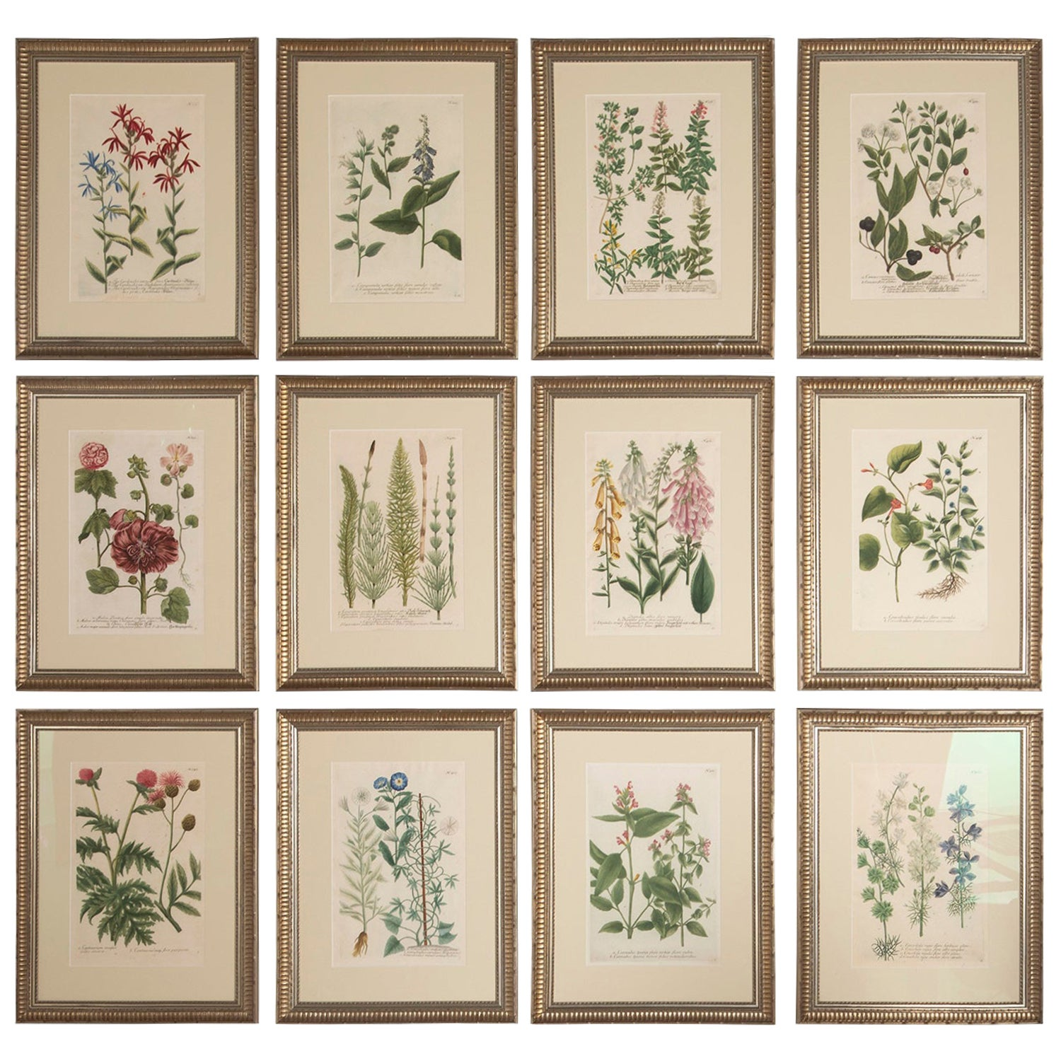 Set of Twelve Botanical Engravings by Johann Weinmann