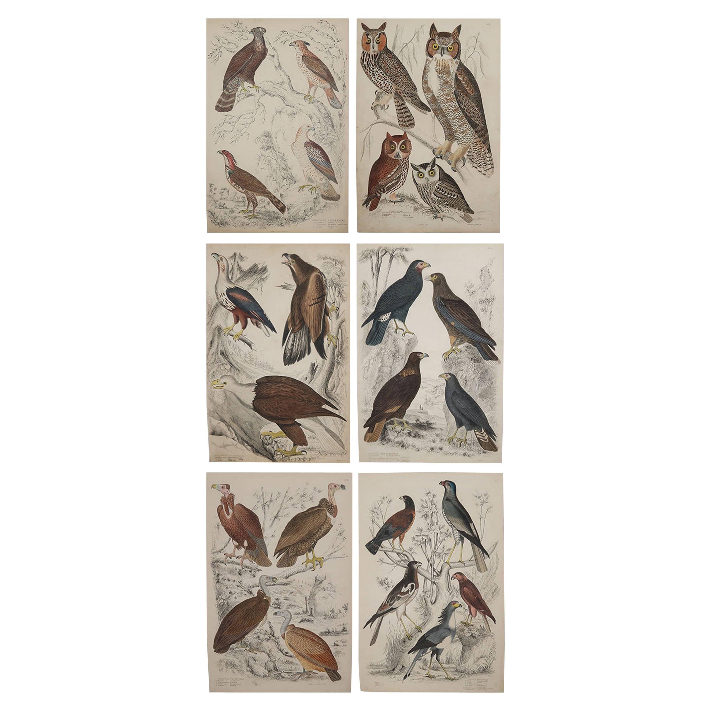 Set of 6 Original Antique Prints of Birds of Prey, 1830s