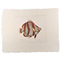 "Contemporary Italian HandColored Print, Collection ""Marina Fish"" 1 of 2"