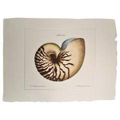 "Contemporary Italian HandColored Print, Collection ""Marina Shell"" 1 of 2"