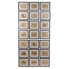Set of 12 English Lucy Dawson Prints Depicting Dogs in Black Frames under Glass