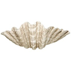 Plaster Shell Sculpted Sconce