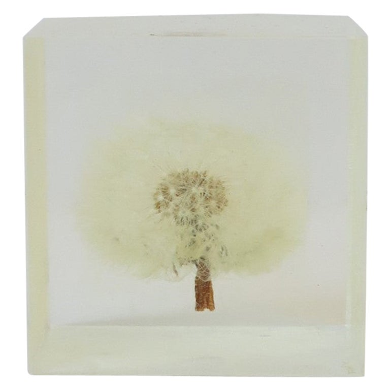 Lucite Cube Encased Dandelion Flower