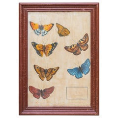 Entomology, Study of Butterflies According to Nature, circa 1950, France