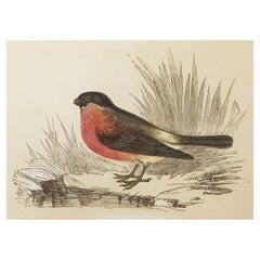 Original Antique Bird Print, the Bullfinch, Tallis, circa 1850