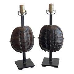 Pair of Specimen Tortoise Shells, Now as Lamps