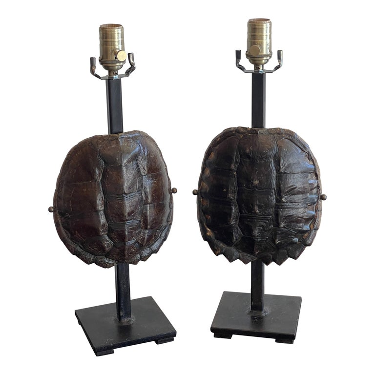 Pair of Specimen Tortoise Shells, Now as Lamps For Sale