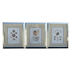 Set of Three Hand Colored Shell Engravings