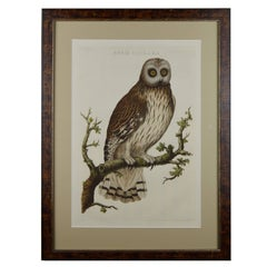 Fine 18th Century Nozeman Copperplate Engraving of an Owl