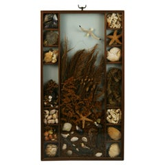 Sea Life and Shell Diorama /Shadow Box