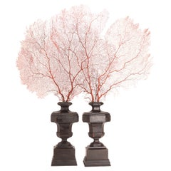Big Pair of Red Horny Coral Branches, Italy, 1860