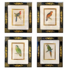 Set of Four Framed Hand Colored Engravings of Birds
