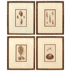 English Victorian Sea Shell Lithographs