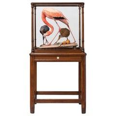 Fine Taxidermy American Flamingo Inspired by Audubon by Sinke & Van Tongeren