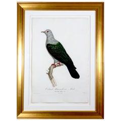 Madam Knipp Engraving of Pigeon