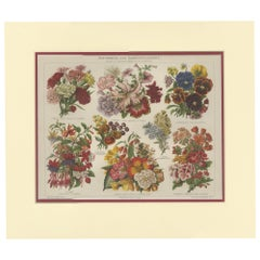 Antique Print of Various Flowers by Meyer 'c.1895'