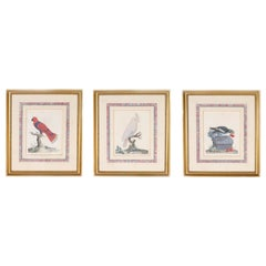 Three Antique Hand Colored Engravings of Birds