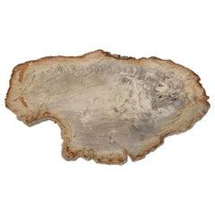 Andrianna Shamaris Petrified Wood Slab