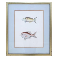 Framed Lithograph of Two Tropical Fish