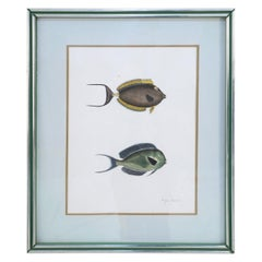 Framed Lithograph of Two Brown and Gray Tropical Fish