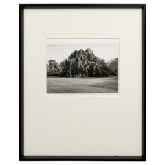 Black and White Photograph of a Tree in a Landscape