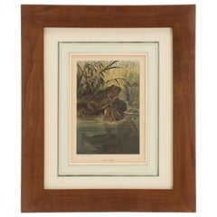 Color Print Depicting Frogs in a Pond, USA 1898
