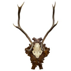 Large Antique Black Forest Deer Antler Trophy Wood Carved Plaque, Austria, 1900s