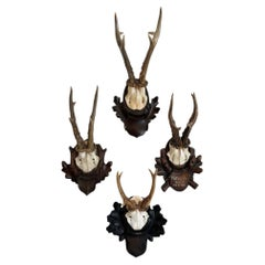 Collection of 8 Black Forest Antler Mounts on Hand-Carved Wood Plaques