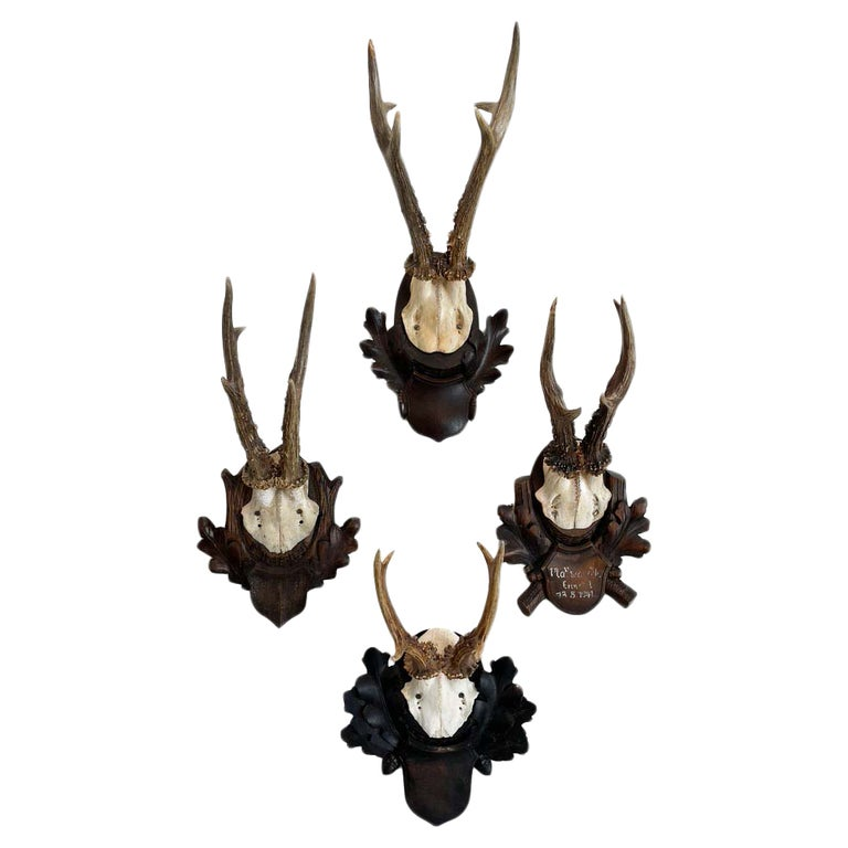 Collection of 8 Black Forest Antler Mounts on Hand-Carved Wood Plaques For Sale