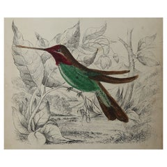 Original Antique Print of Hummingbirds, circa 1835, Unframed