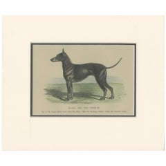 Antique Dog Print of a Black and Tan Terrier, circa 1890