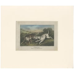 Antique Print of Harrier Dogs hunting Hares by Wheble '1797'