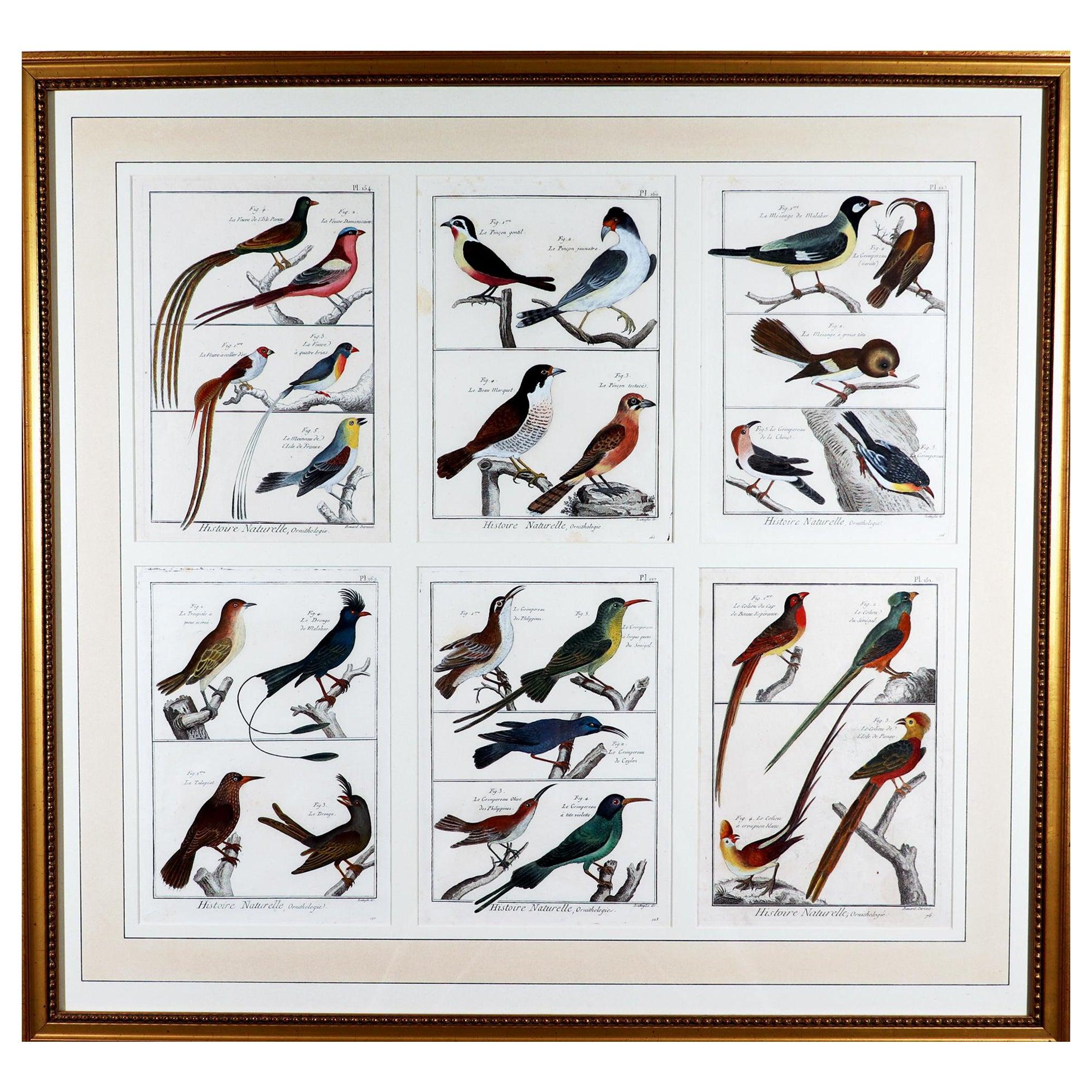 Framed Group of 18th Century Bird Engravings