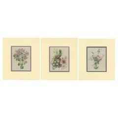 Set of 3 Vintage Flower Prints 'c.1930'
