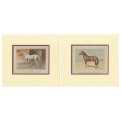 Set of 2 Antique Horse Prints by Simonov