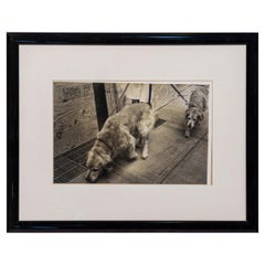 Black and White Photograph of Two Dogs Walking