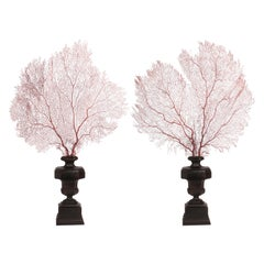 Pair of Horny Coral Branches, Italy, 1870