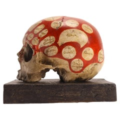 Phrenological Skull According to the Theory of Franz J. Gall, Italy, circa 1850