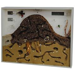School Teaching Display Anthill of the Red Wood Ant Showcase
