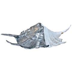 Italian 1960s Pewter Sea Shell