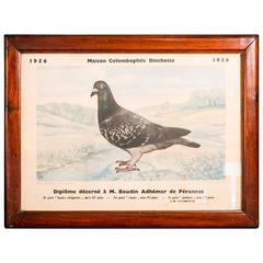 Collection of Vintage Framed Belgian Pigeon Championship Diplomas