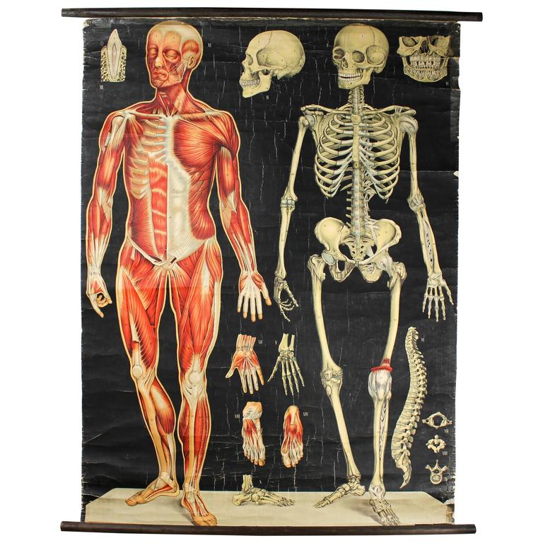 Asombroso Wall Chart Of Human Anatomy Embellecimiento - Anatomía de ...