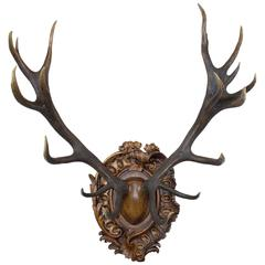19th Century Habsburg Red Stag on Hand-Carved Rococo Style Plaque