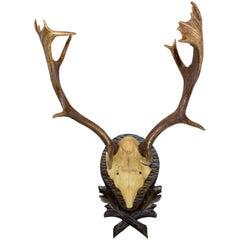 19th Century Habsburg Fallow Deer from Eckartsau Castle on Black Forest Plaque
