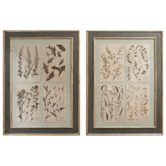 Pair of 19th Century French Framed Botanicals